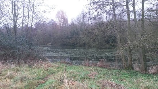 Linford Lakes Nature Reserve: 20180112_104756_large.jpg