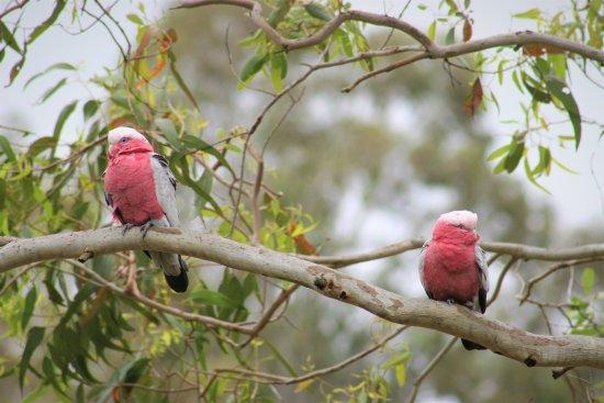 Cedars Mount View: Bird watching