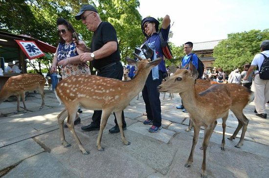 Private Excursion to Nara
