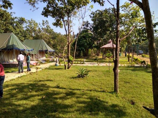 Tent inside Kuldiha camp - Picture of Kuldiha Wild Life Santuary ...