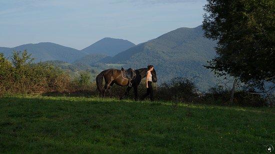 Ferme équestre Cheval en Hautes Pyrénées