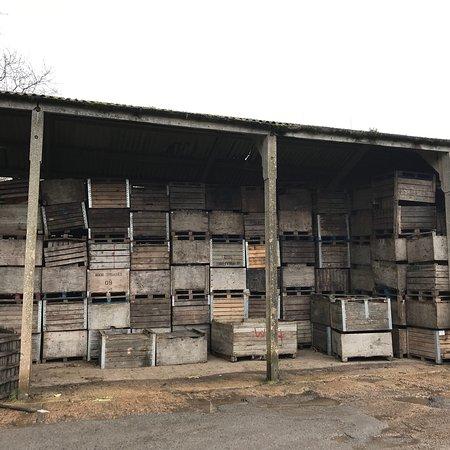 Bilting, UK: Perry Court Farm