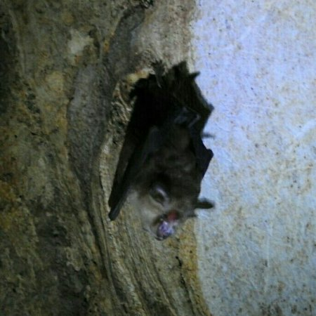 Khao Luk Chang Bat Cave: IMG_20180103_214521_553_large.jpg