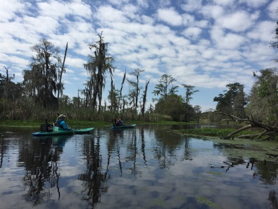 Mandeville, LA: Paddling Cane Bayou is a great way to spot wildlife.