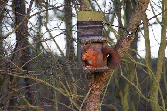 Hauxley Wildlife Discovery Centre - Northumberland Wildlife Trust Resmi
