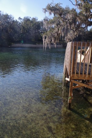 Salt Springs Recreation Area: Another set of steps into the Springs