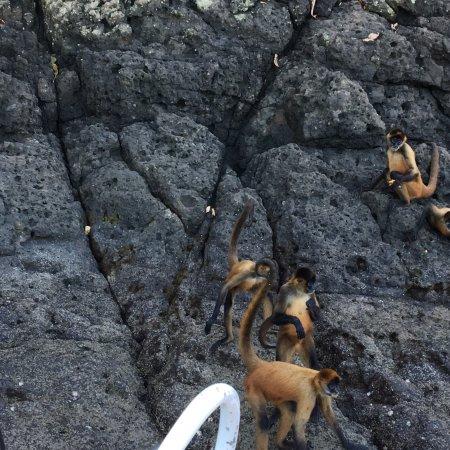 Tortuga Island: photo0.jpg