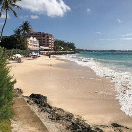Bougainvillea Barbados: photo3.jpg