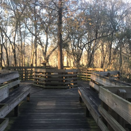 Lettuce Lake Regional Park: Best place to cool down and relax ! This park has beautiful board walks to cuddle the nature , r