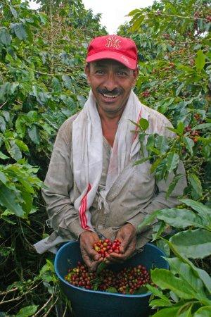 Genova, Colombia: Los recolectores de Café en la finca Génova - Café Pereira