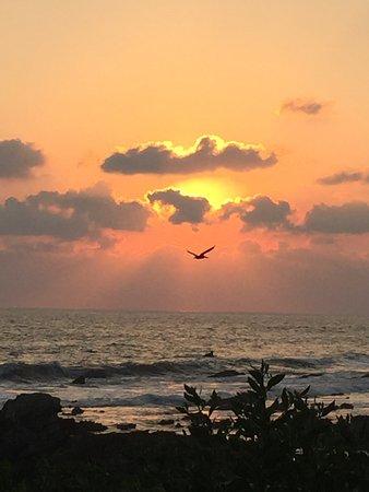 Regalo del Mar Vacation Inn: Pelicans at sunset