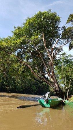 Ulu Temburong National Park, Brunei Darussalam: 20170827_090505_large.jpg
