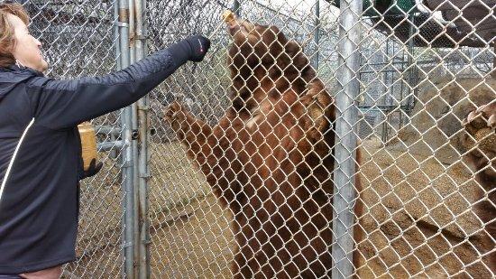 Southwest Wildlife Conservation Center: 20180110_104159_large.jpg