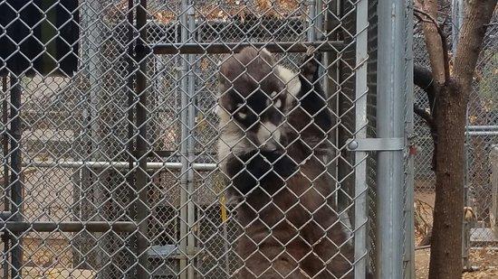 Southwest Wildlife Conservation Center: 20180110_101711_large.jpg