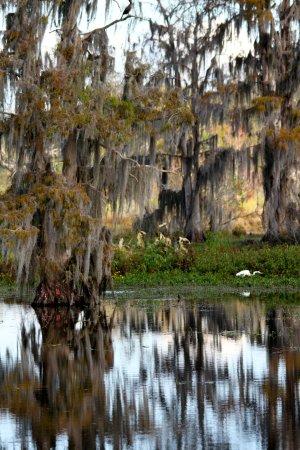 Circle B Bar Reserve: Real Florida beauty