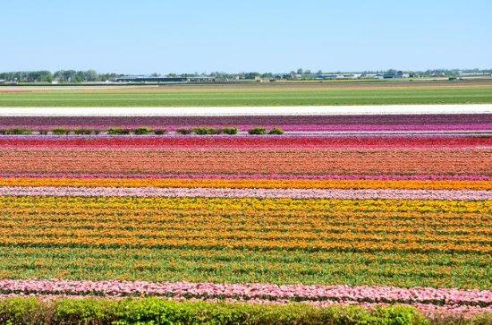 Keukenhof and Flowerfields, Volendam ...