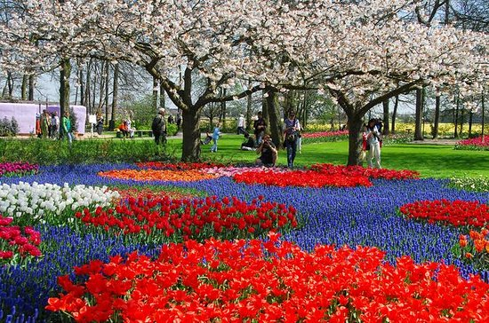 Keukenhof Gardens Skip-the-Line Tour...