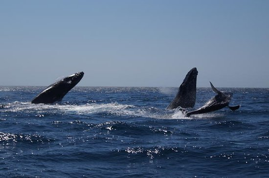 Whale Watching in Cabo