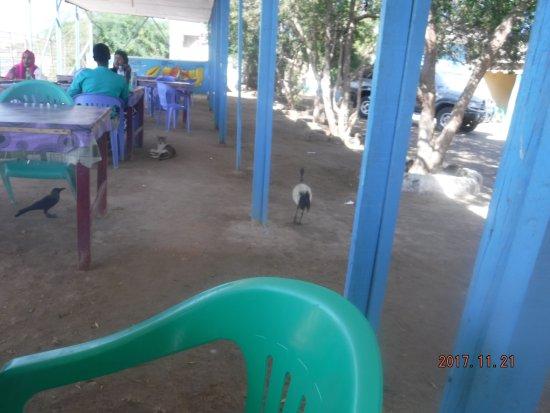 Berbera, Somalia: Cats and birds, big deal!