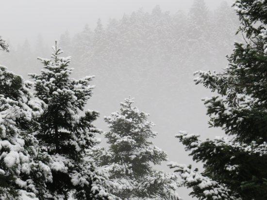 Grecia central, Grecia: χιονισμενο τοπιο!