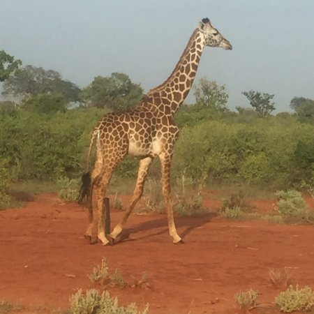 Safari Kenya Watamu - Day Tours: photo0.jpg