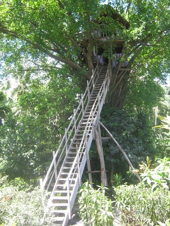 Thomas 39 Treehouse Foto Yasur Camping Ground And Tree