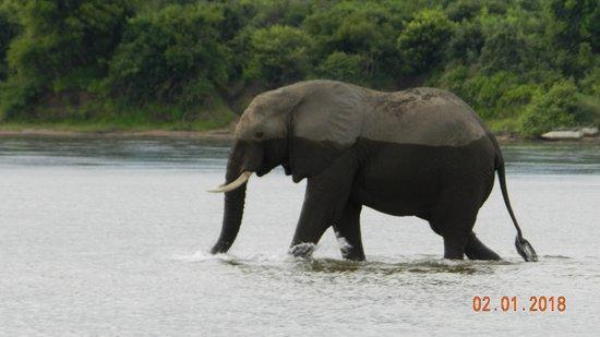 Lower Zambezi National Park ภาพถ่าย