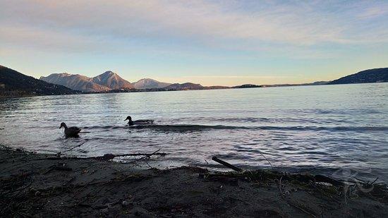 Riserva Naturale Speciale di Fondotoce: Riva del Lago