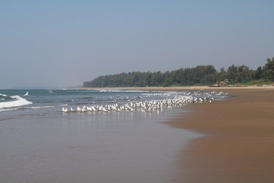 Beach - Picture of Athaang Beach Resort, Malvan - Tripadvisor