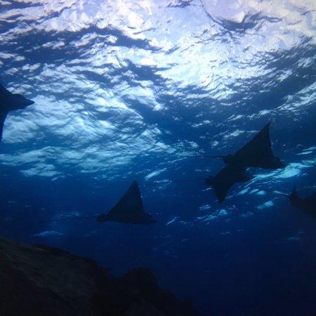 Saipan Mei Dive 1968 - Day Tours: photo2.jpg