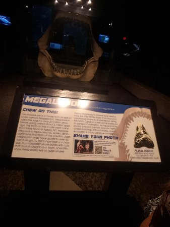 Kure Beach, NC: The Megalodon exhibit