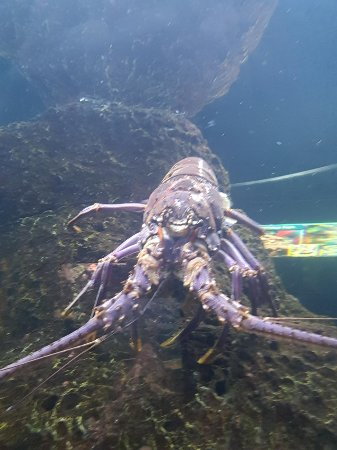Kure Beach, NC: Crab Exhibit