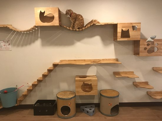 Cat Up Cafe: Cat Boxes, Bridges And Stairs On The Wall