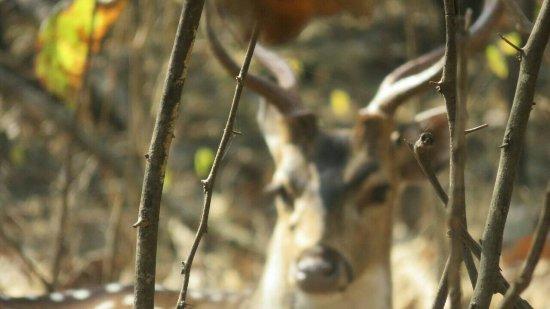 Gir National Park and Wildlife Sanctuary: IMG-20180103-WA0073_large.jpg