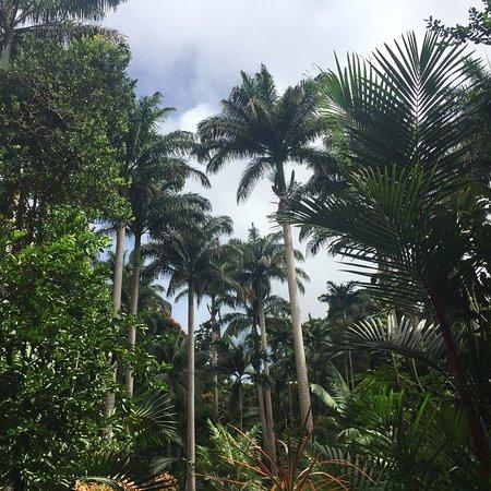 Saint Joseph Parish, Barbados: photo1.jpg