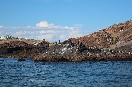Rumbo del Plata-Punta en Kayak: Aves marinas. Travesía Bahía de la ballena - Whale bay tour.