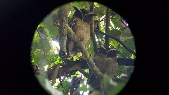 Дрейк-Бэй, Коста-Рика: LECHUZA