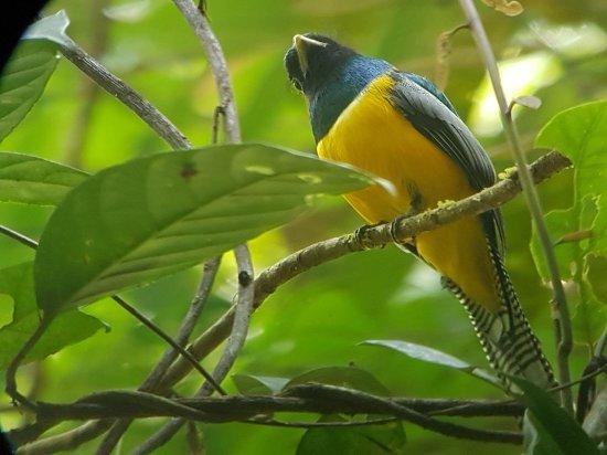 Дрейк-Бэй, Коста-Рика: TROGON