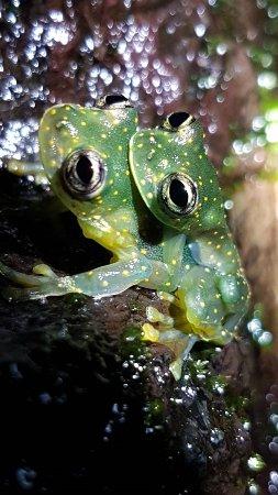 Дрейк-Бэй, Коста-Рика: RANITAS