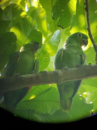 Drake Bay, Costa Rica: LORAS