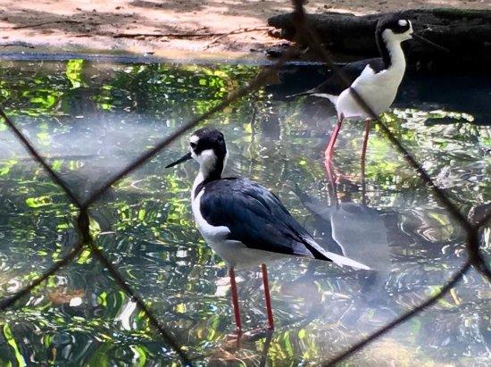 Isla Baru, Colombie : Tranquility and Birds