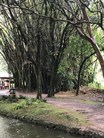Kaneohe, ฮาวาย: Bamboo Fort