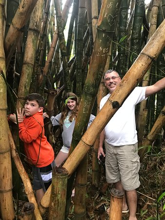 Kaneohe, HI: In Bamboo Fort
