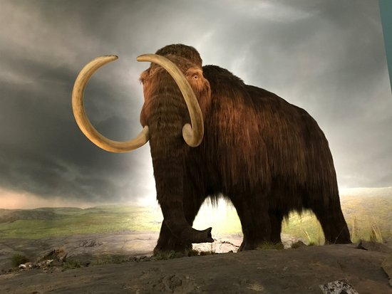 Royal BC Museum : Woolly Mammoth