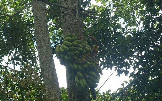 San Gerardo, Kosta Rika: DSC06438-1_large.jpg