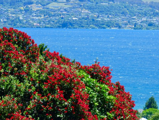 Waipahihi Botanical Gardens: A view over Lake Taupo from the gardens