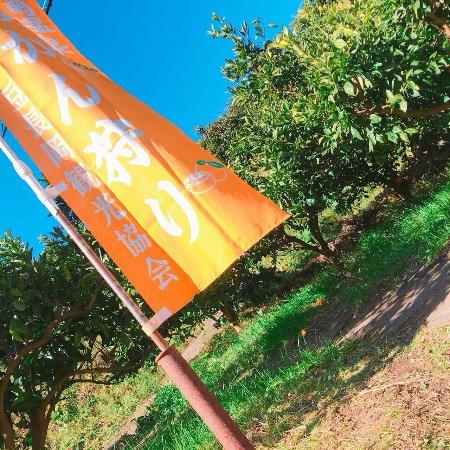 Osaka Orange Farm