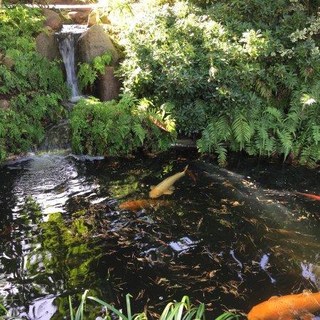 Self Realization Fellowship Hermitage Meditation Gardens Encinitas Ca Updated 2018 Top