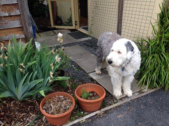 Strahan Village: GUARD DOG ??