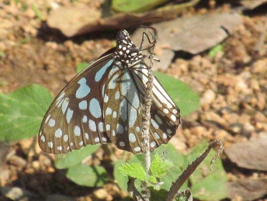 Nehru Zoological Park: butterfly